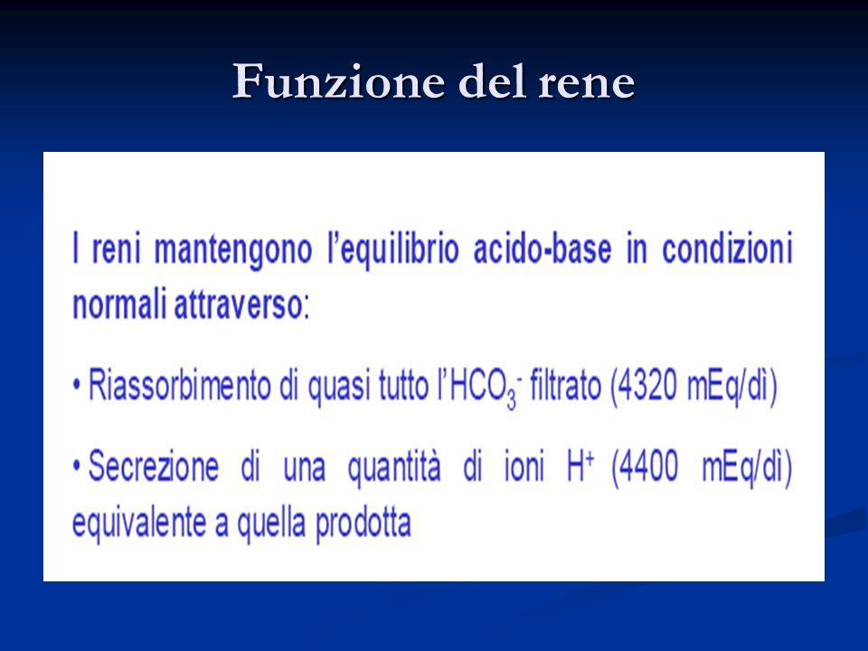 Funzione del rene