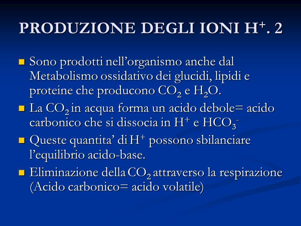 PRODUZIONE DEGLI IONI H+. 2