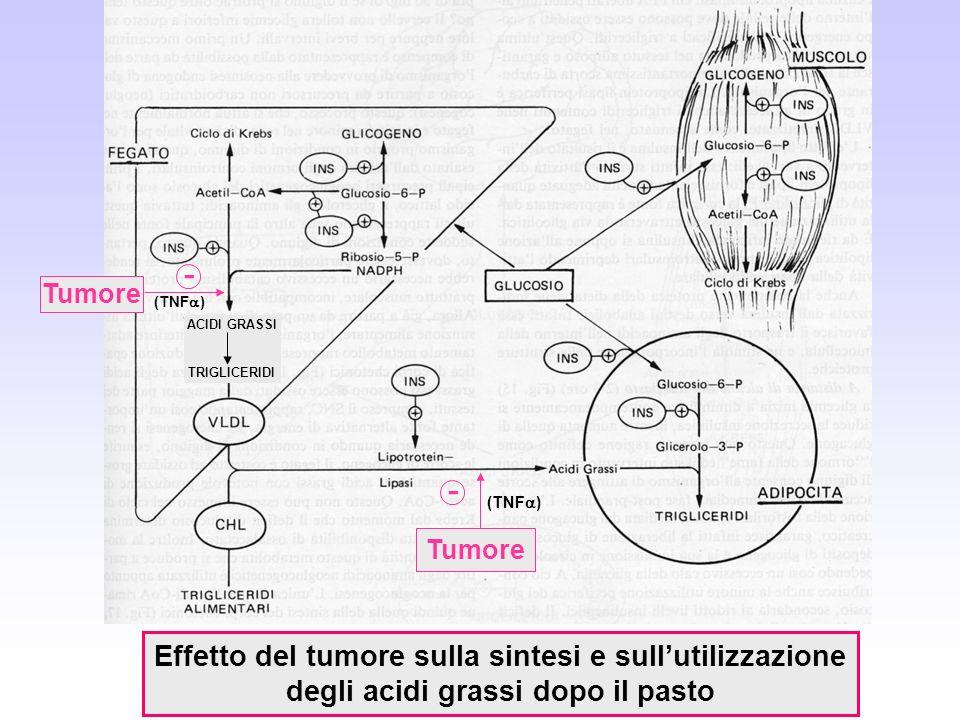 - - Effetto del tumore sulla sintesi e sull'utilizzazione