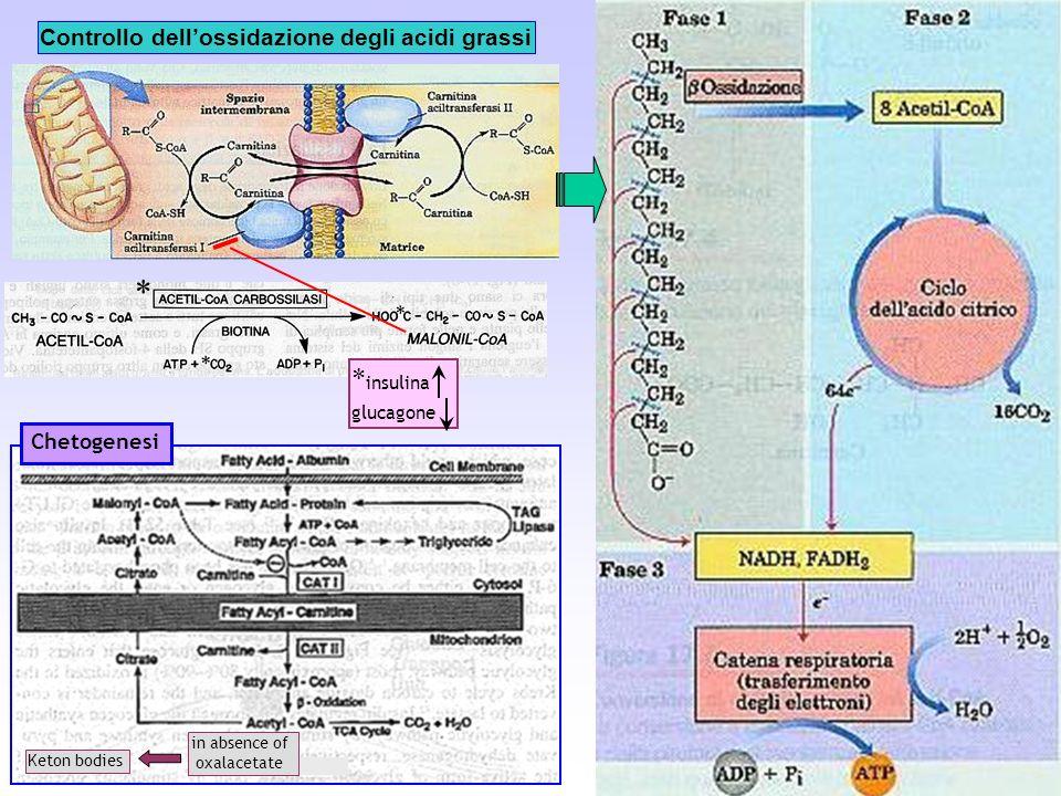 Controllo dell'ossidazione degli acidi grassi