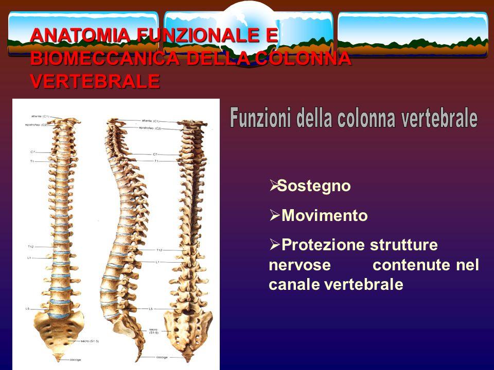 Funzioni della colonna vertebrale