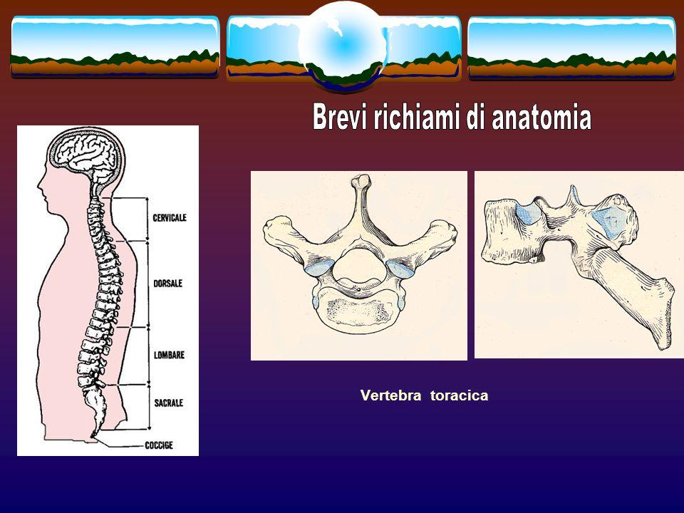 Brevi richiami di anatomia