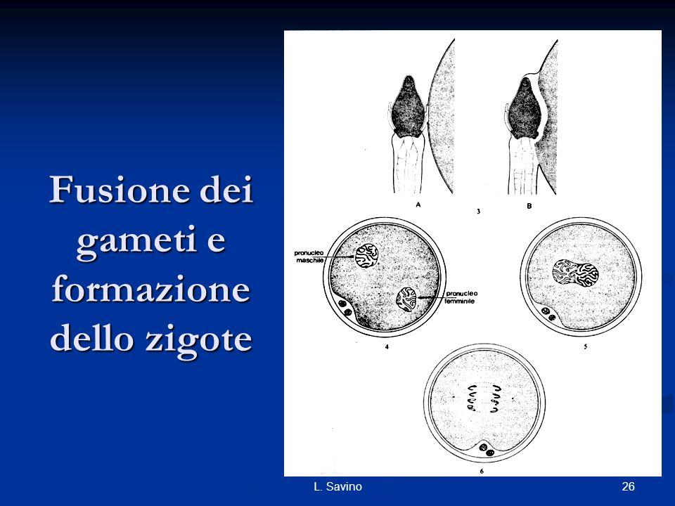 Fusione dei gameti e formazione dello zigote