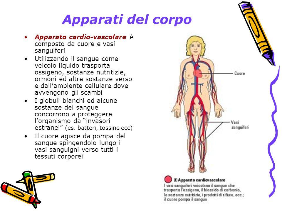 Apparati del corpo Apparato cardio-vascolare è composto da cuore e vasi sanguiferi.