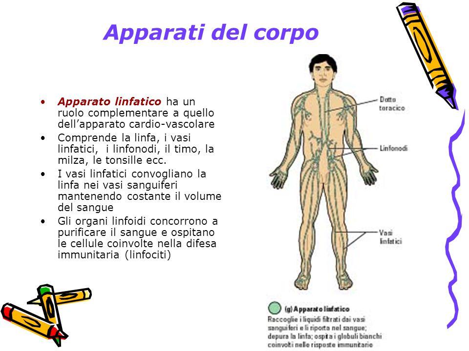 Apparati del corpo Apparato linfatico ha un ruolo complementare a quello dell'apparato cardio-vascolare.