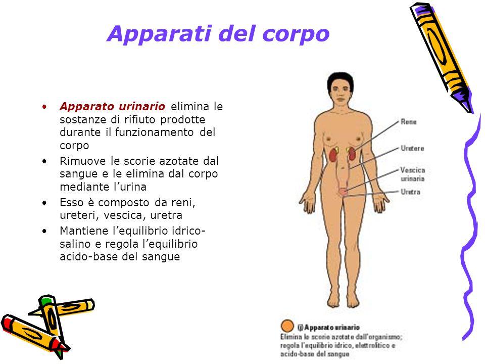 Apparati del corpo Apparato urinario elimina le sostanze di rifiuto prodotte durante il funzionamento del corpo.
