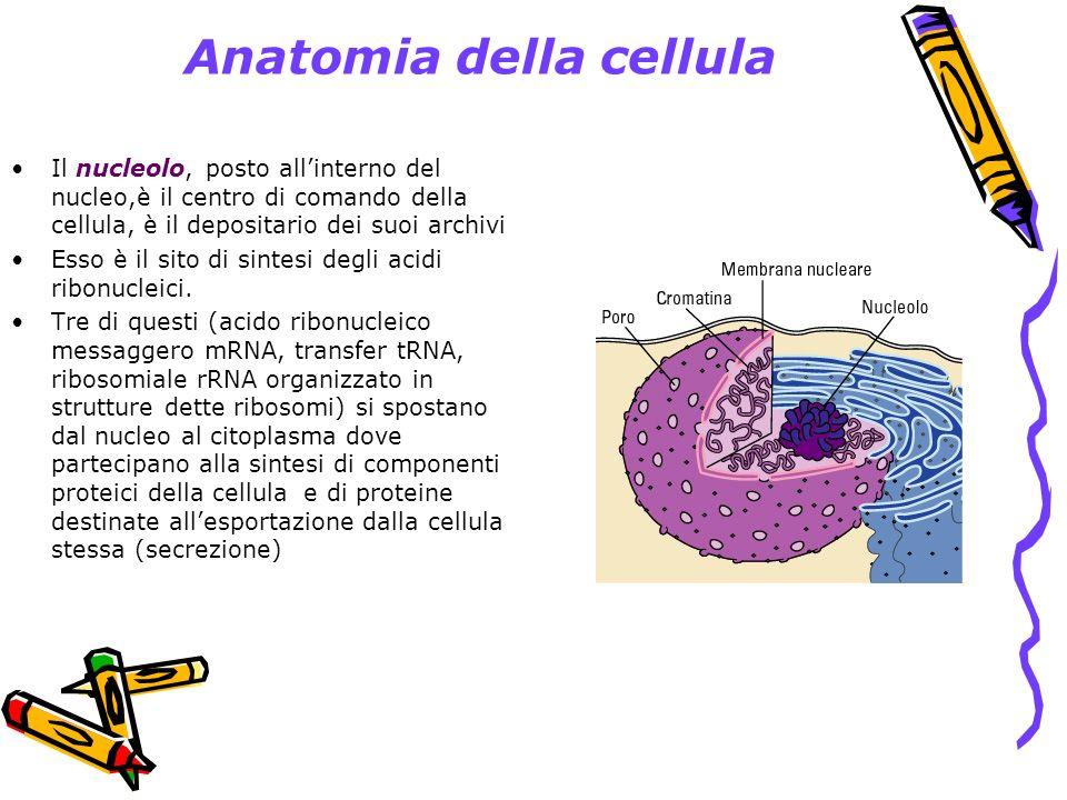 Anatomia della cellula