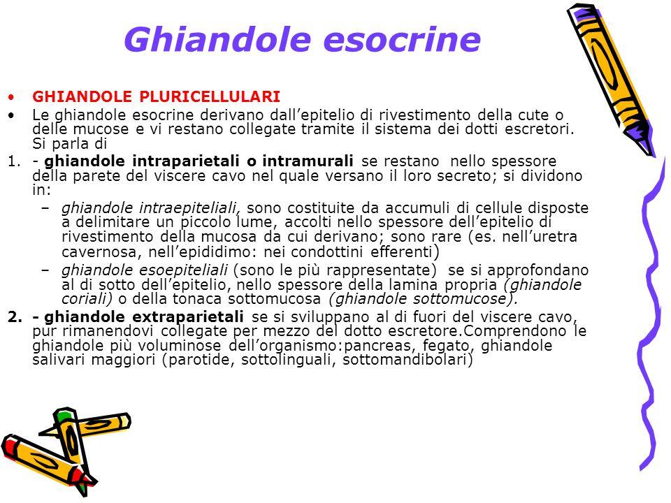 Ghiandole esocrine GHIANDOLE PLURICELLULARI