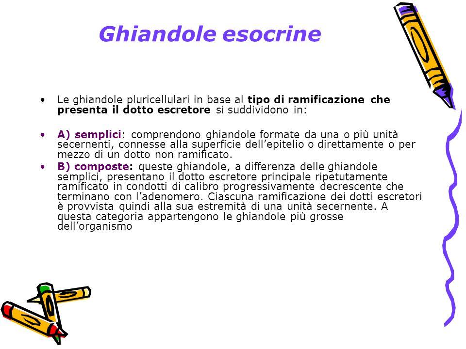 Ghiandole esocrine Le ghiandole pluricellulari in base al tipo di ramificazione che presenta il dotto escretore si suddividono in: