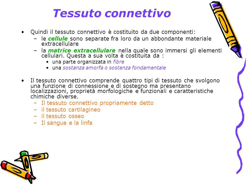 Tessuto connettivoQuindi il tessuto connettivo è costituito da due componenti: