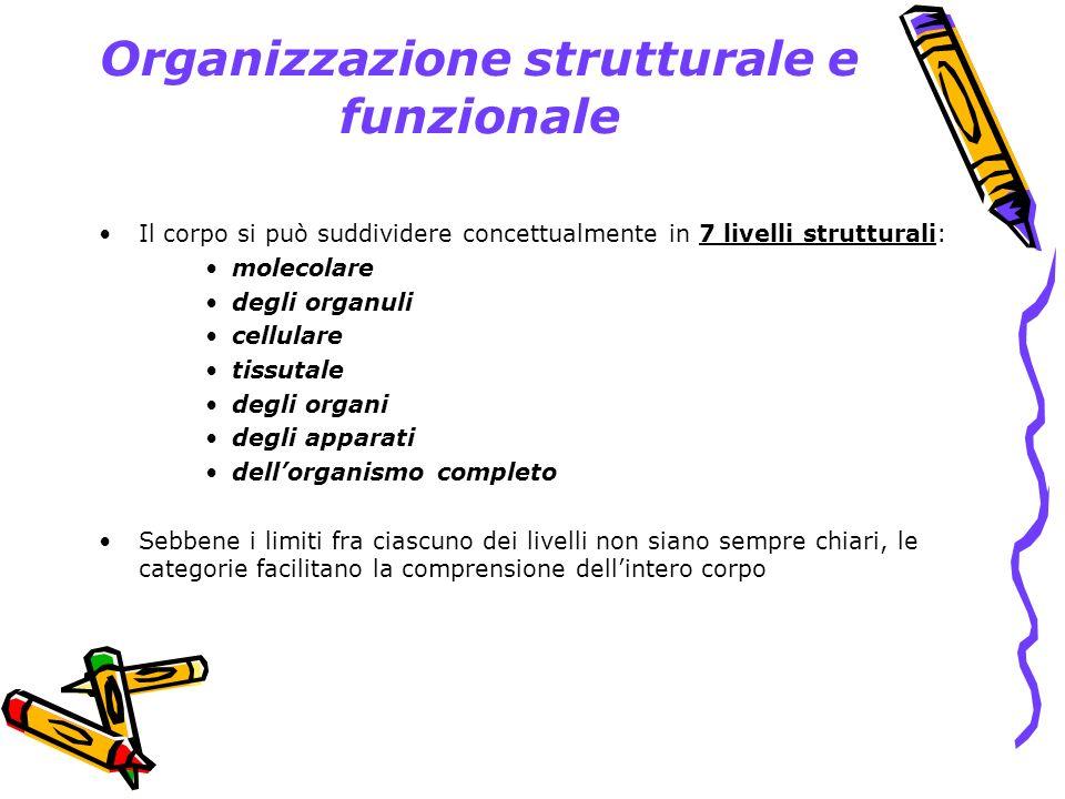 Organizzazione strutturale e funzionale