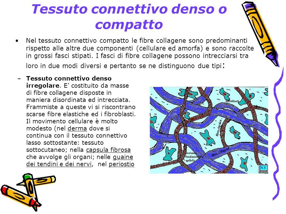 Tessuto connettivo denso o compatto