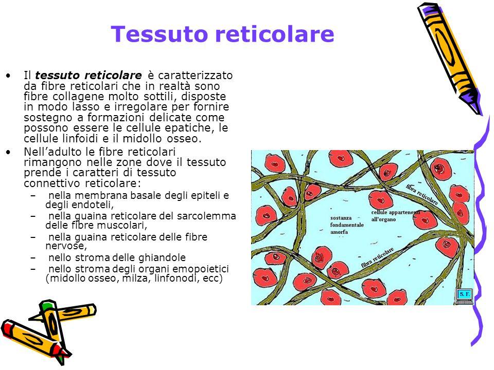Tessuto reticolare