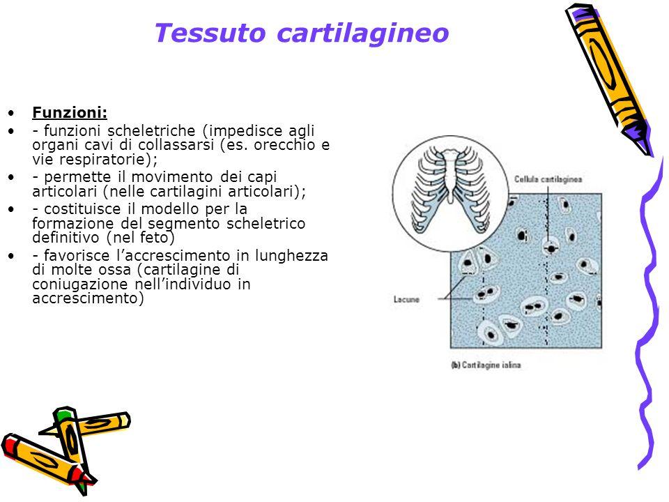 Tessuto cartilagineo Funzioni:
