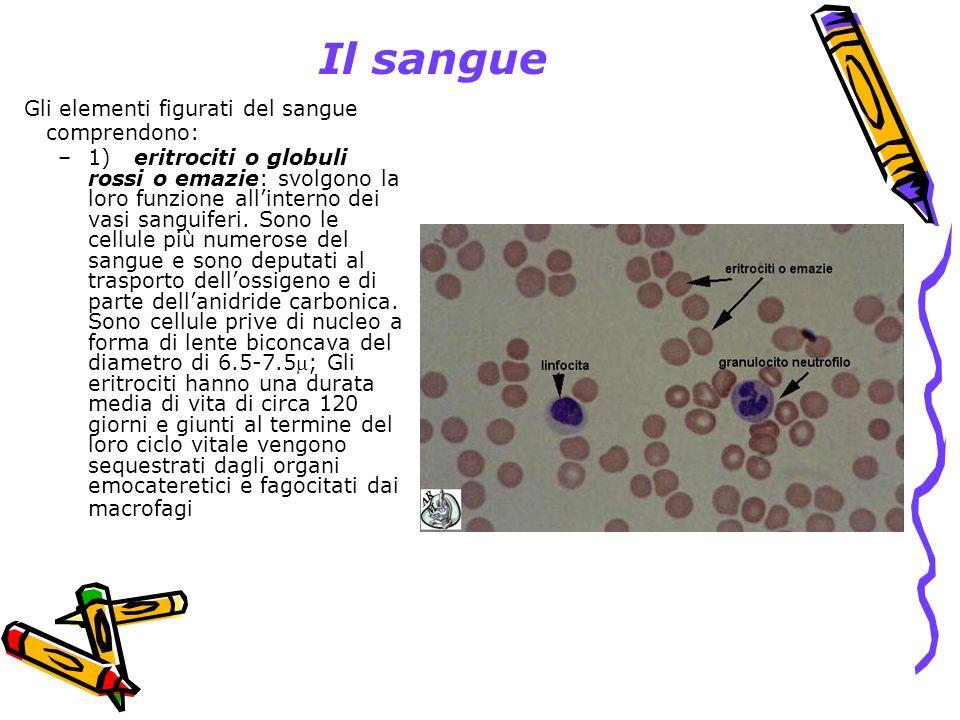 Il sangue Gli elementi figurati del sangue comprendono: