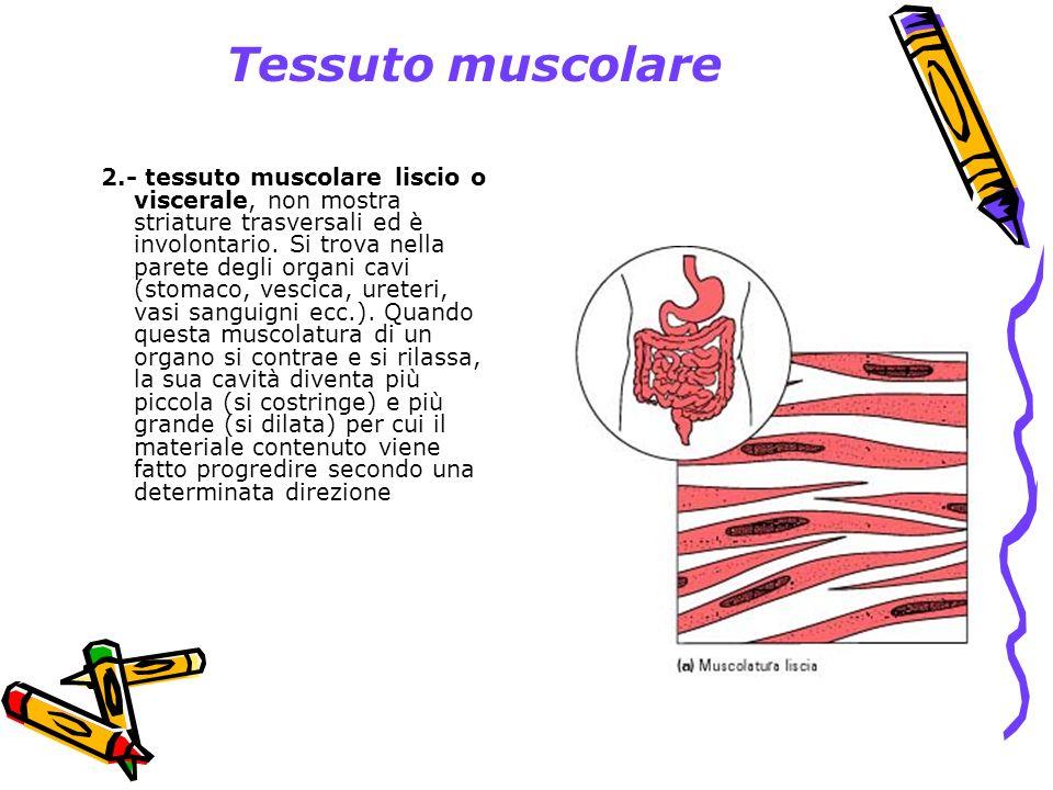 Tessuto muscolare