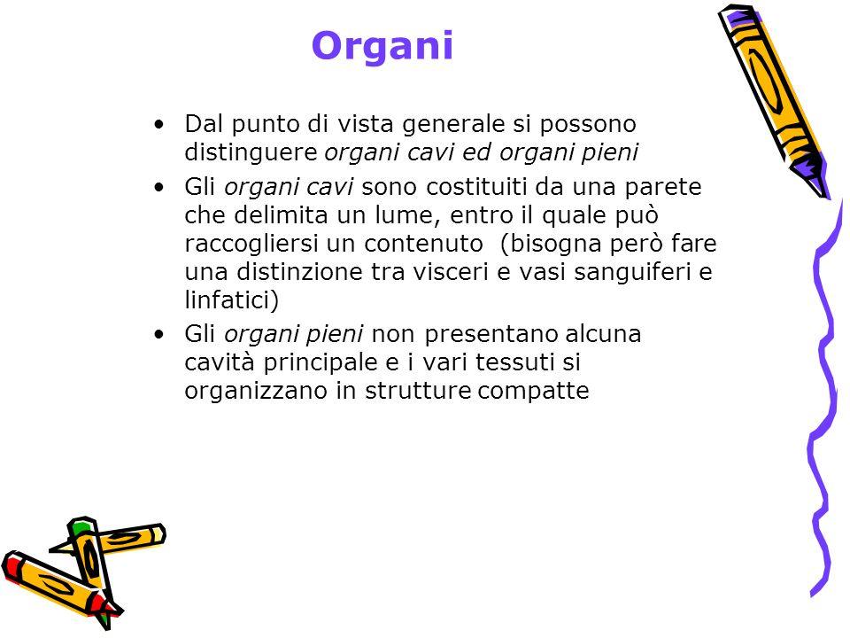 Organi Dal punto di vista generale si possono distinguere organi cavi ed organi pieni.