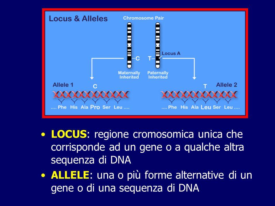 LOCUS: regione cromosomica unica che corrisponde ad un gene o a qualche altra sequenza di DNA