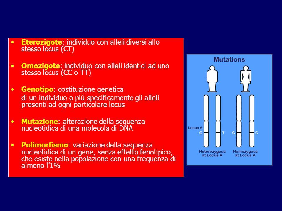 Eterozigote: individuo con alleli diversi allo stesso locus (CT)