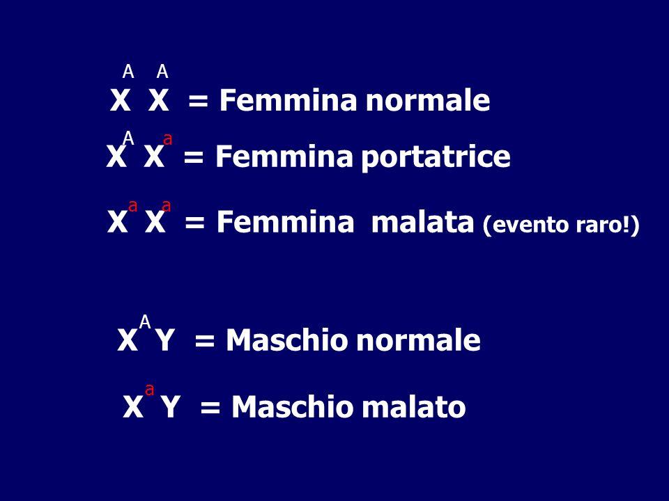 X X = Femmina portatrice
