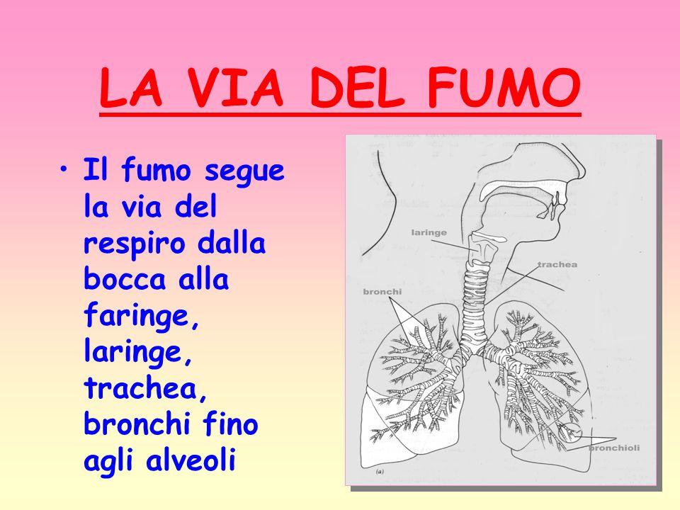 LA VIA DEL FUMO Il fumo segue la via del respiro dalla bocca alla faringe, laringe, trachea, bronchi fino agli alveoli.