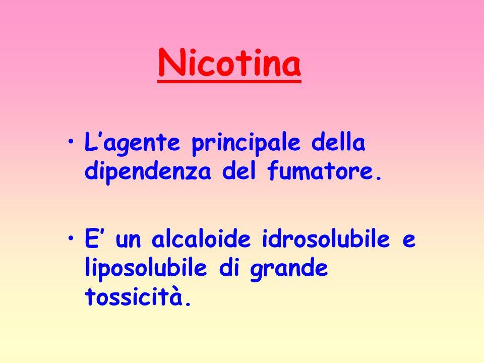 Nicotina L'agente principale della dipendenza del fumatore.