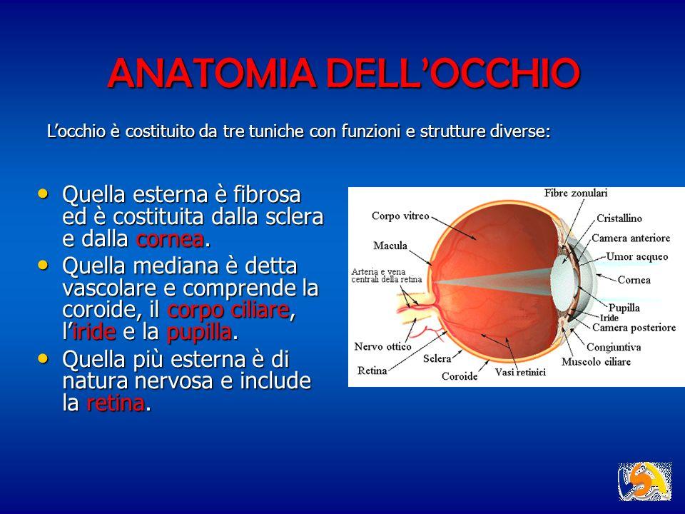 ANATOMIA DELL'OCCHIO L'occhio è costituito da tre tuniche con funzioni e strutture diverse: