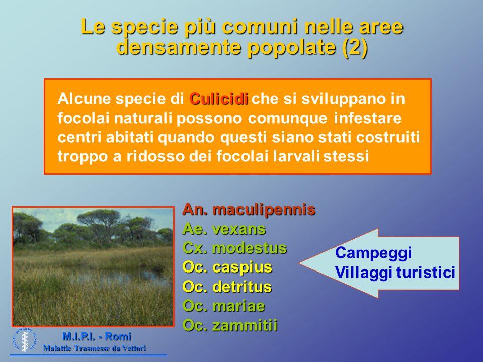 Le specie più comuni nelle aree densamente popolate (2)