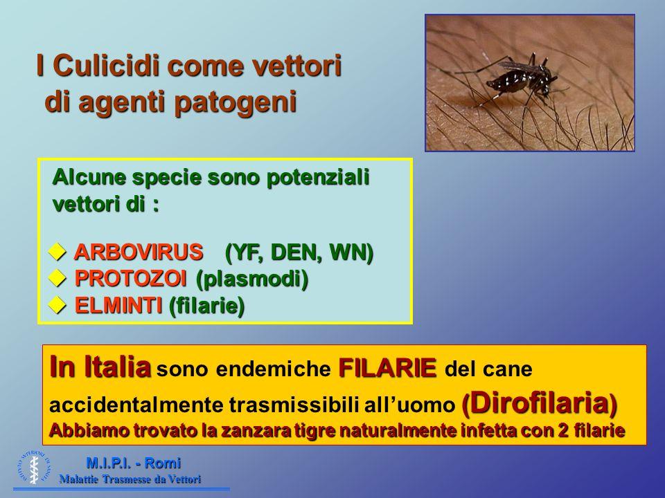 I Culicidi come vettori di agenti patogeni