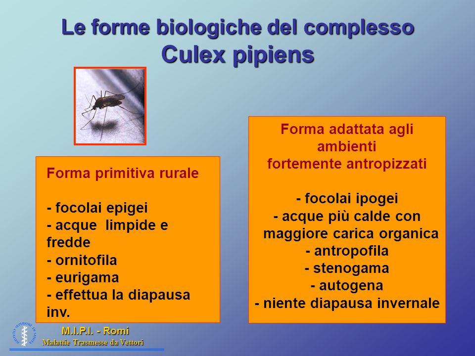 Le forme biologiche del complesso Culex pipiens