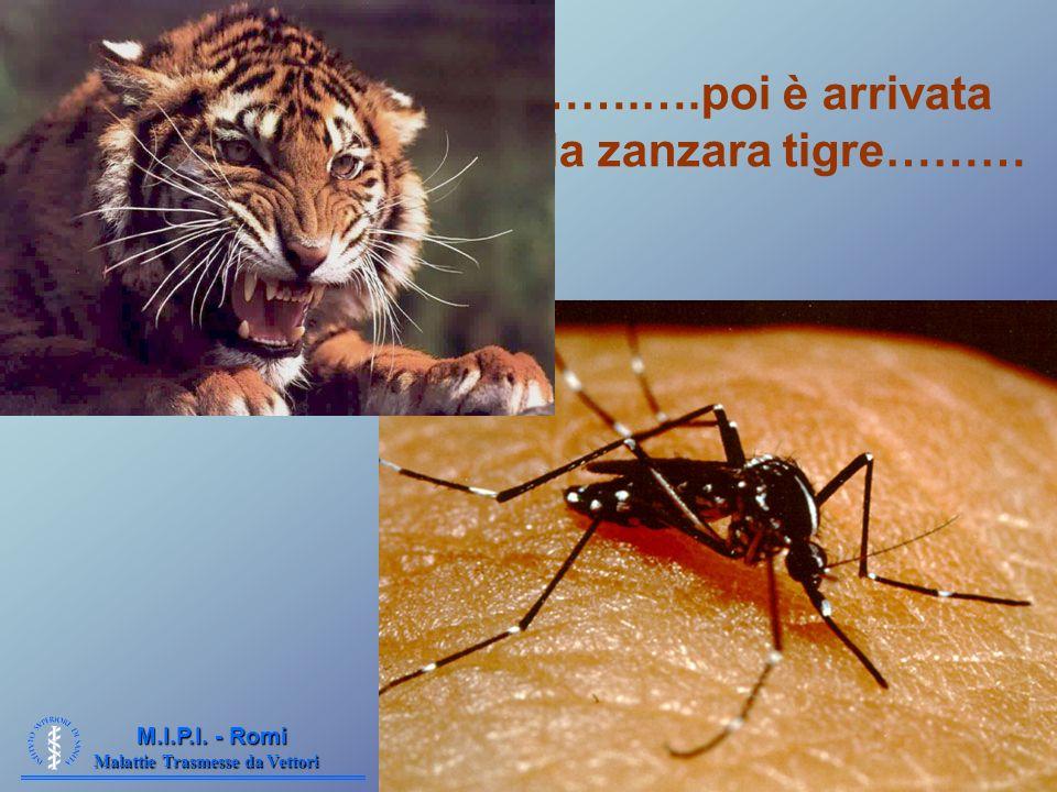 …….….poi è arrivata la zanzara tigre………