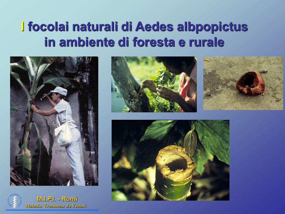 I focolai naturali di Aedes albpopictus in ambiente di foresta e rurale