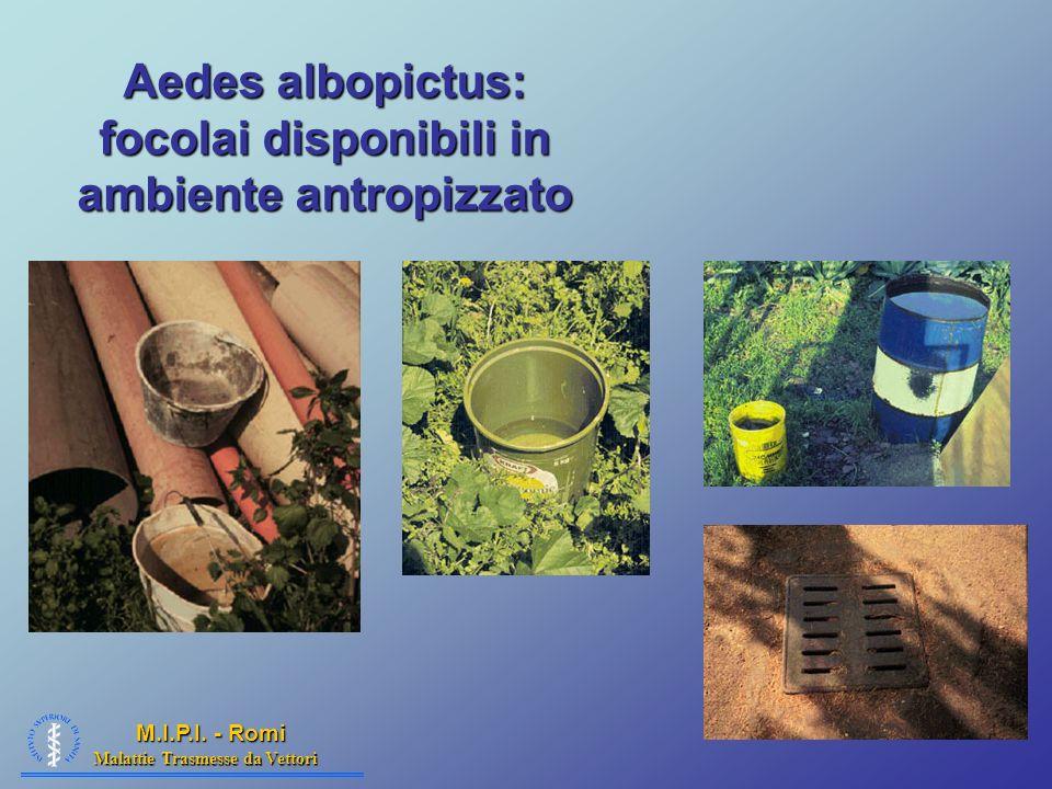 Aedes albopictus: focolai disponibili in ambiente antropizzato