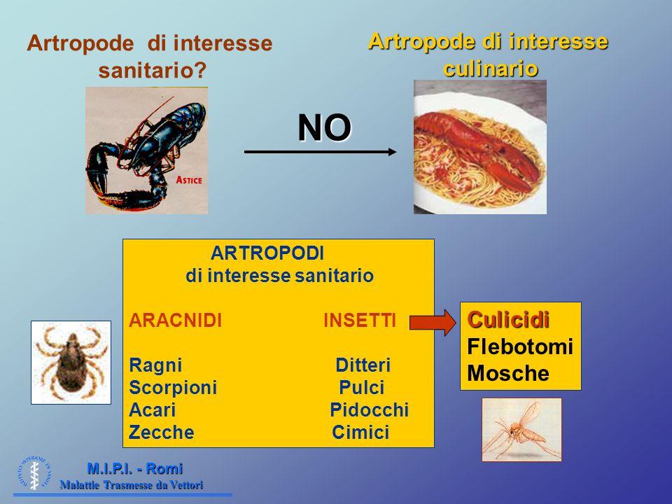 Artropode di interesse Artropode di interesse