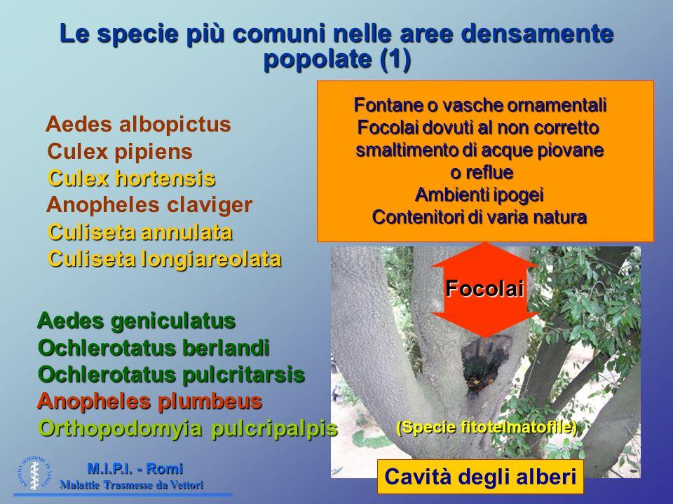 Le specie più comuni nelle aree densamente popolate (1)