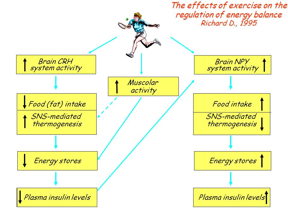 The effects of exercise on the regulation of energy balance