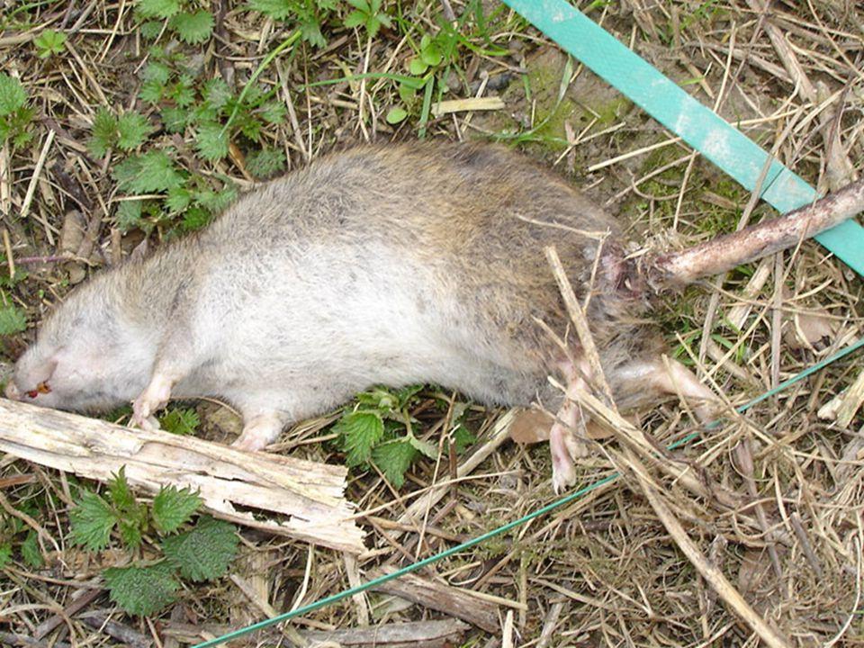 Una città libera da ratti e insetti vettori di malattie