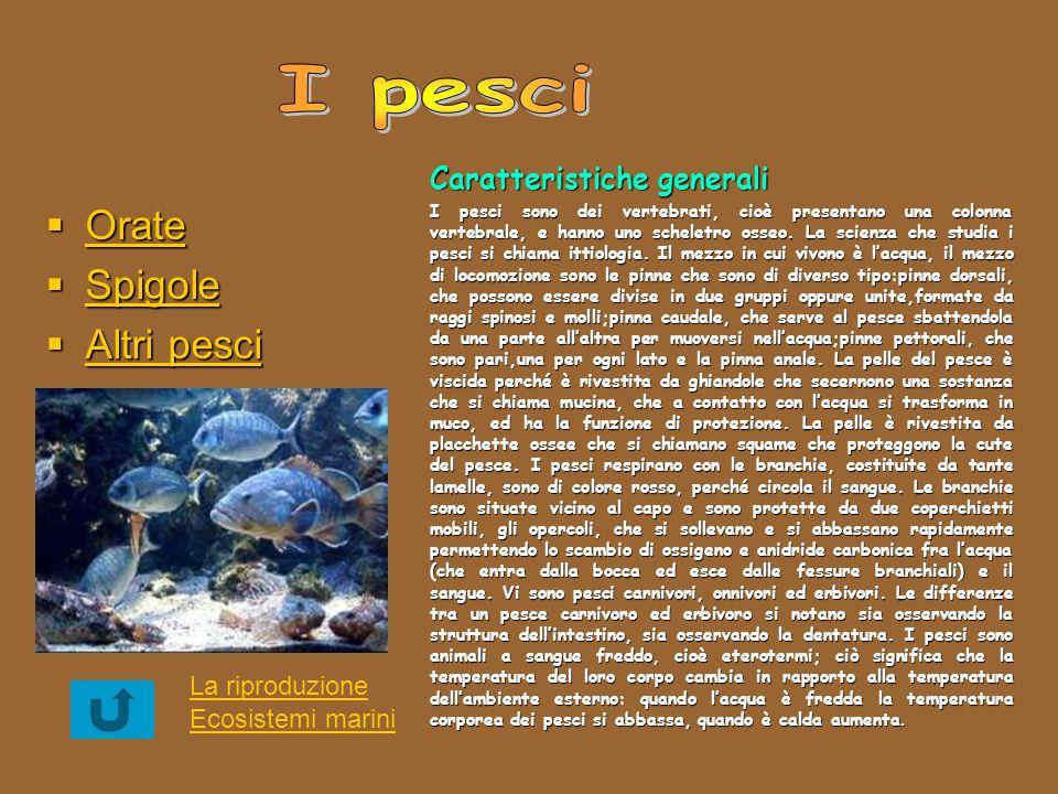 I pesci Orate Spigole Altri pesci Caratteristiche generali