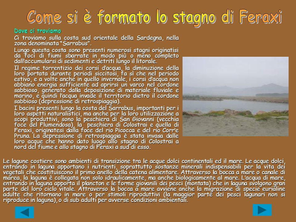 Come si è formato lo stagno di Feraxi