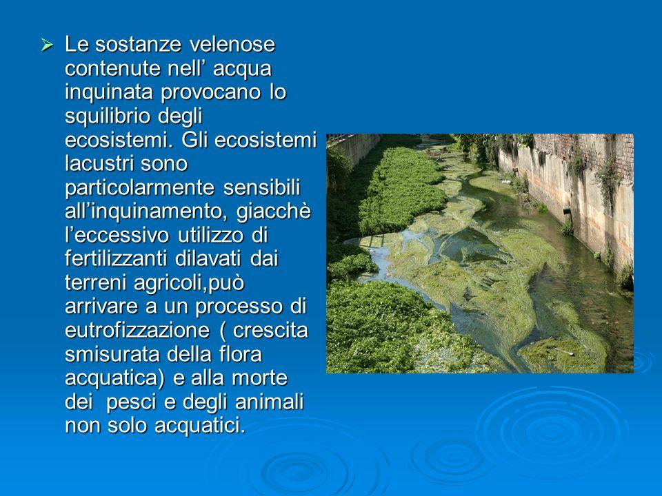 Le sostanze velenose contenute nell' acqua inquinata provocano lo squilibrio degli ecosistemi.