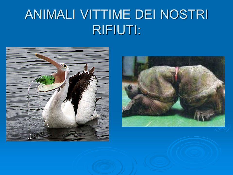 ANIMALI VITTIME DEI NOSTRI RIFIUTI: