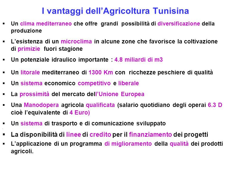 I vantaggi dell'Agricoltura Tunisina