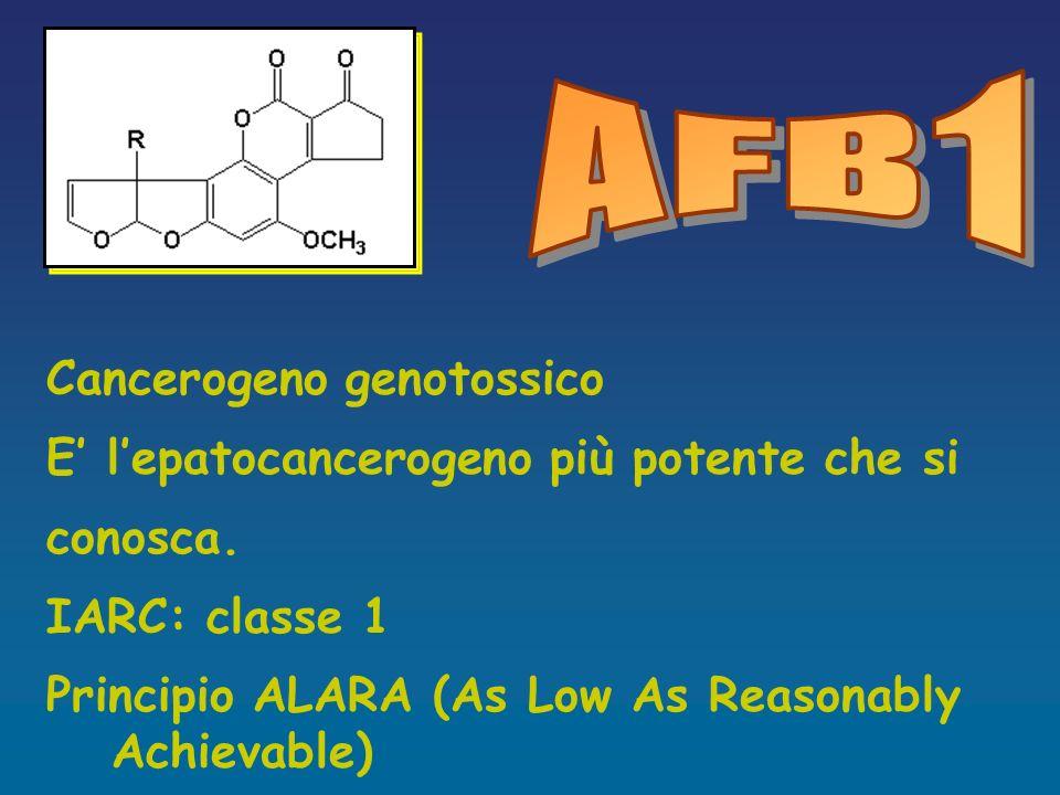AFB1 Cancerogeno genotossico E' l'epatocancerogeno più potente che si