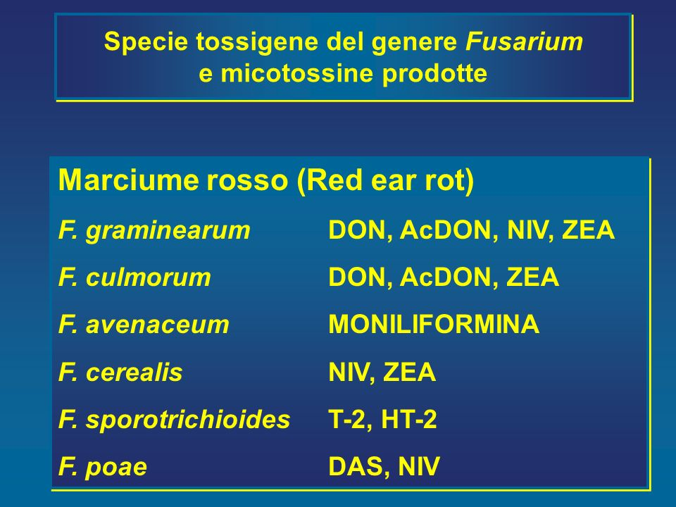 Specie tossigene del genere Fusarium e micotossine prodotte