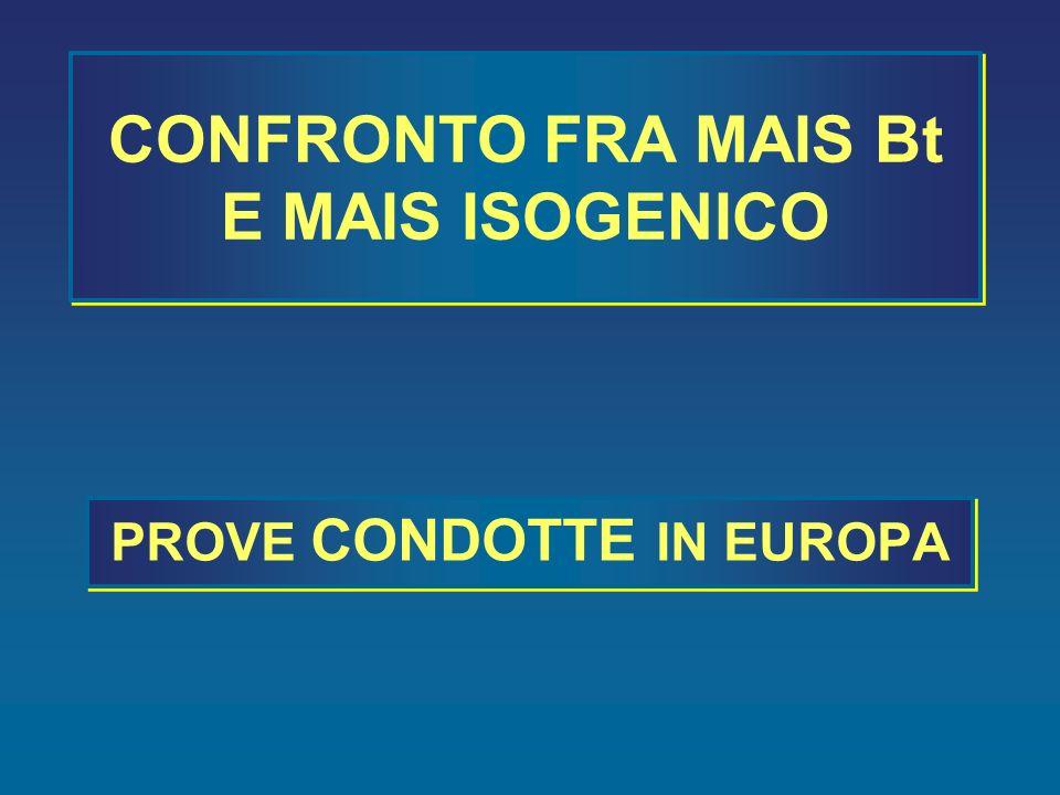 CONFRONTO FRA MAIS Bt E MAIS ISOGENICO
