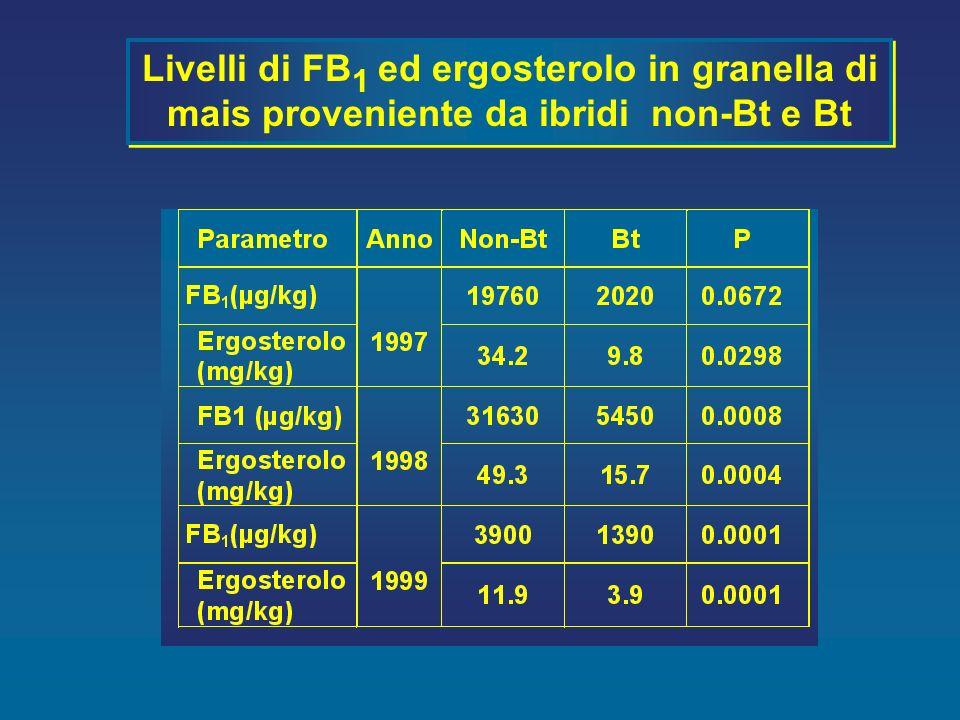 Livelli di FB1 ed ergosterolo in granella di mais proveniente da ibridi non-Bt e Bt
