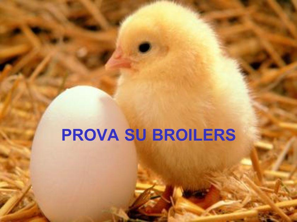 PROVA SU BROILERS