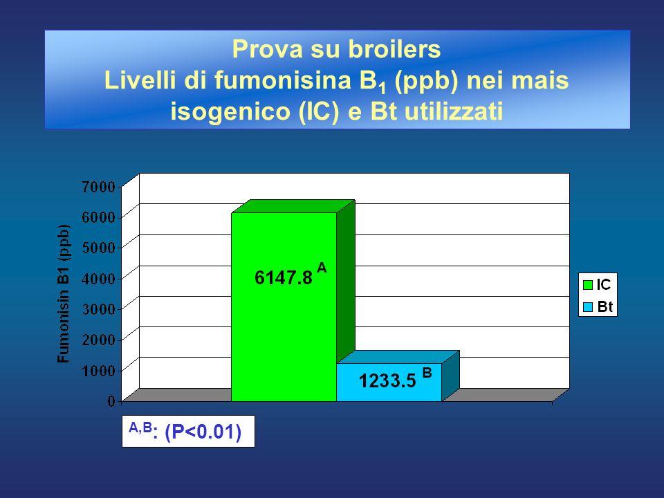 Prova su broilers Livelli di fumonisina B1 (ppb) nei mais isogenico (IC) e Bt utilizzati