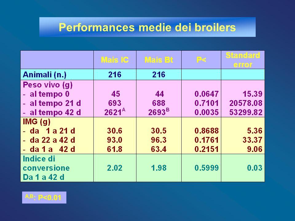 Performances medie dei broilers
