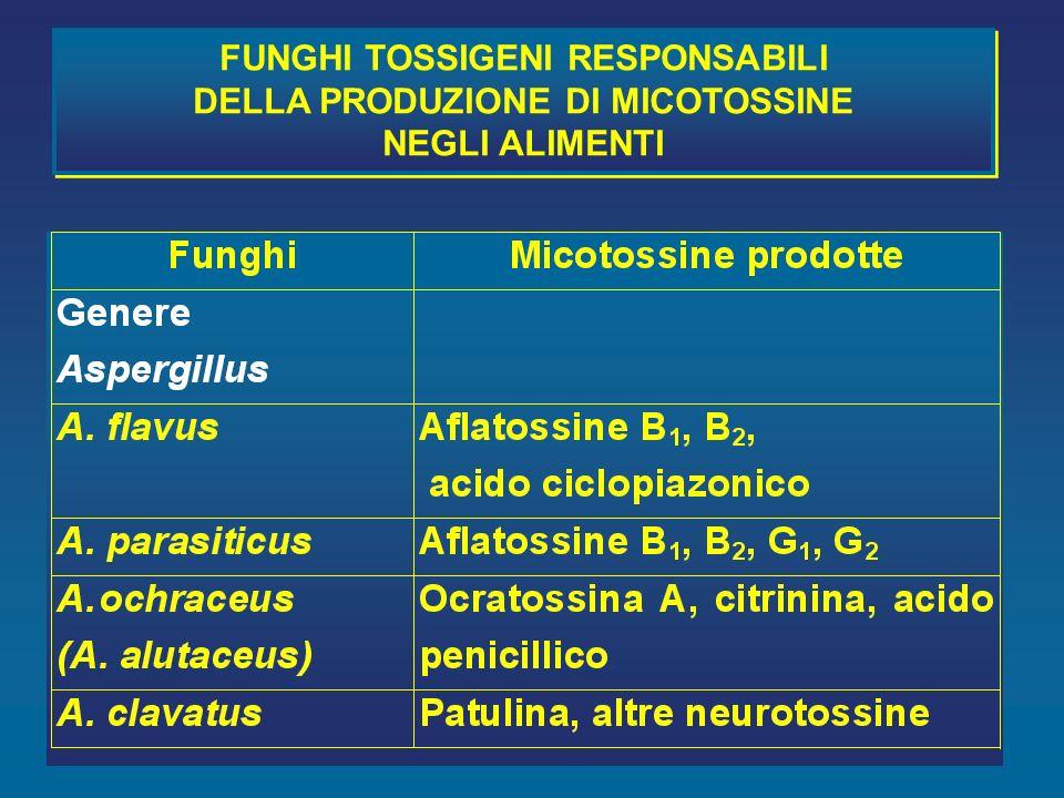 FUNGHI TOSSIGENI RESPONSABILI DELLA PRODUZIONE DI MICOTOSSINE